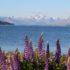 Lake Tekapo, Nuova Zelanda. Autore e Copyright Marco Ramerini
