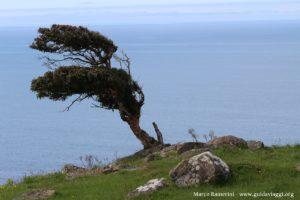 Albero, Catlins, Nuova Zelanda. Autore e Copyright Marco Ramerini
