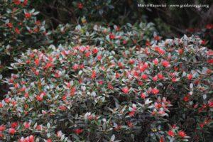Fiori, Doubtful Sound, Nuova Zelanda. Autore e Copyright Marco Ramerini.