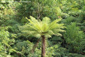 Vegetazione, Doubtful Sound, Nuova Zelanda. Autore e Copyright Marco Ramerini.